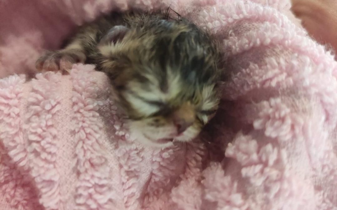 Unser I-Baby wurde geboren!
